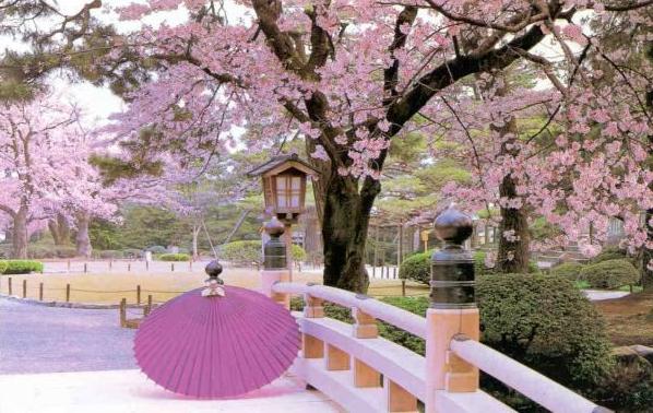 Cherry-Blossoms-Japan-